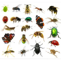 Briefmarken      des Themas Insekten  '
