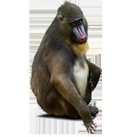 Briefmarken      des Themas Affen  '