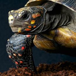Briefmarken      des Themas Schildkröten  '