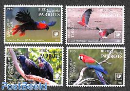 Parrots 4v