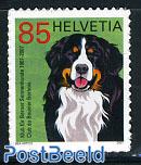 Bernese mountain dog 1v s-a