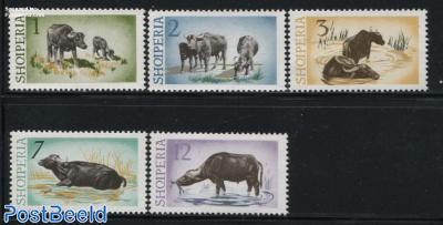 Water Buffel 5v