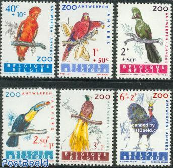 Birds 6v