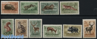Forest animals 10v